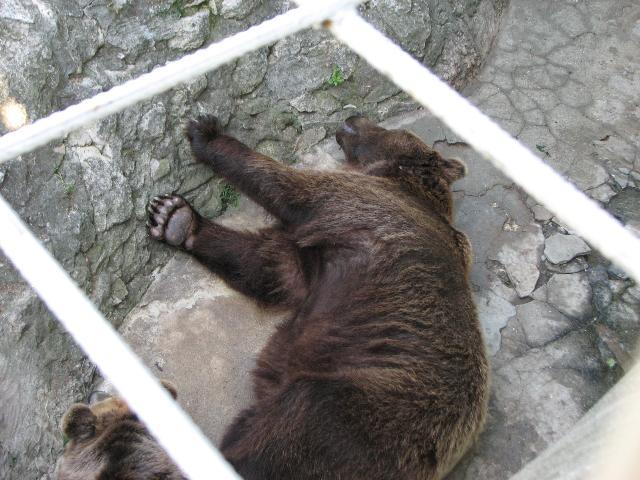 Зоопарк Варна